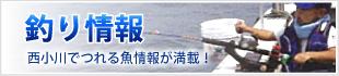 福井県若狭小浜の釣り情報